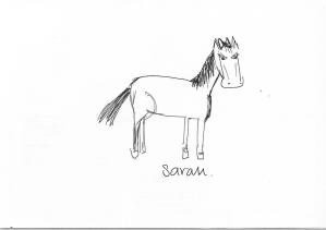 Team horses_Sarah